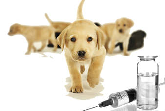 animal-vaccines-market